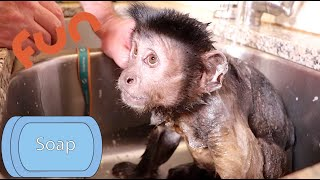 Capuchin MonkeyBoo Bath and Snack Cabinet Time!