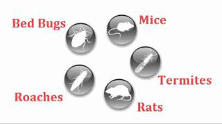 Mice exterminator los angeles, 213-928-7721, mice control long beach, rat control carson