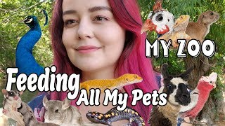 feeding all my pets my zoo routine 2019