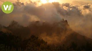 La Gomeras Nebelwald | Europas Urwälder, Folge 2