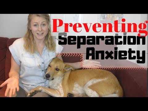 How To PREVENT SEPARATION ANXIETY In Your DOG | InRuffCompany.com