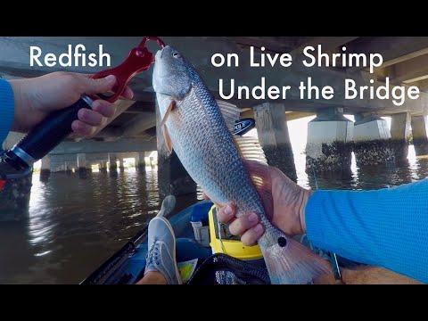 Bridge Fishing At Cedar Key