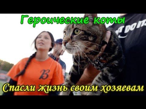 Вопрос: Кем считают кошки детей хозяев?