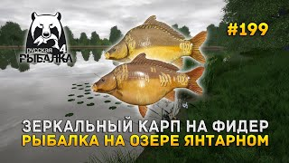 Зеркальный карп на Фидер Рыбалка на озере Янтарном Русская Рыбалка 4 199