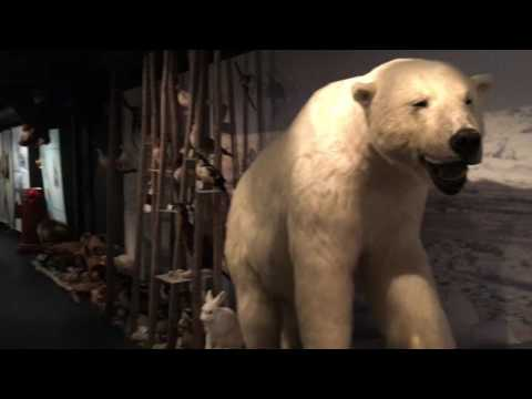 Travel Norway Hammerfest Top Destinations Hurtigruten Stop Point Polar Bear Museum