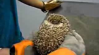 Ежик плачет У ветеринара(, 2015-06-23T08:25:22.000Z)