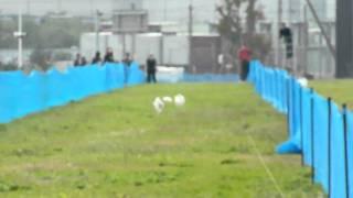 ルアーコーシング パピヨン 100m.