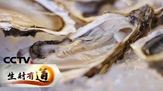 《生财有道》 20190909 生态中国沿海行 辽宁长海县:海风 海味 海财富  CCTV财经