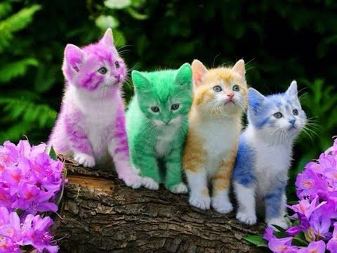 Awesome Colourfull Cat Collection WhatsApp Status