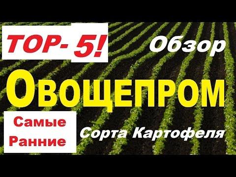 ТОП5 - Ультра Ранние сорта Картофеля!