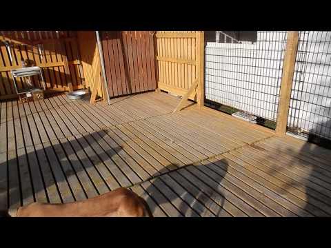 大型犬エリア サルーキちゃん