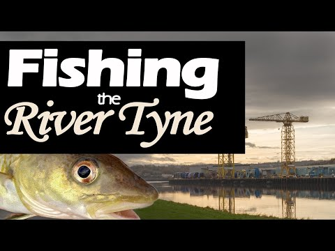 Shore Fishing For Cod - The River Tyne