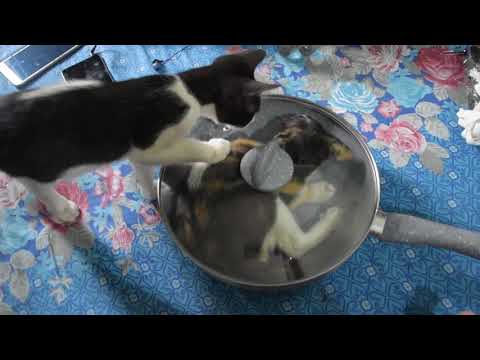 Kittens playing insanely with their mother
