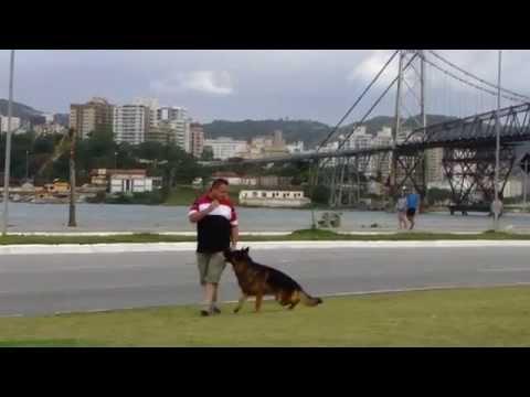 Axel Von Haus Zurück na Beira Mar de Florianópolis - Pastor Alemão