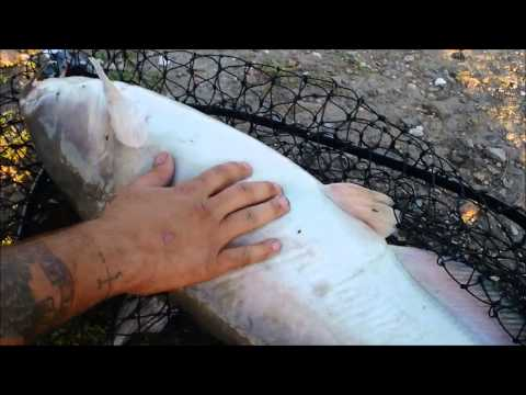 Mississippi River catfish fishing into the night