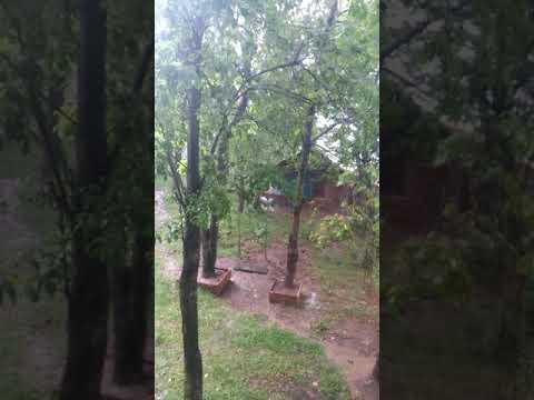 Yağmurla karışık behçet gülas...