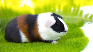 УДИВИТЕЛЬНЫЕ ГОЛОСА ЖИВОТНЫХ, звуки которые издают животные.