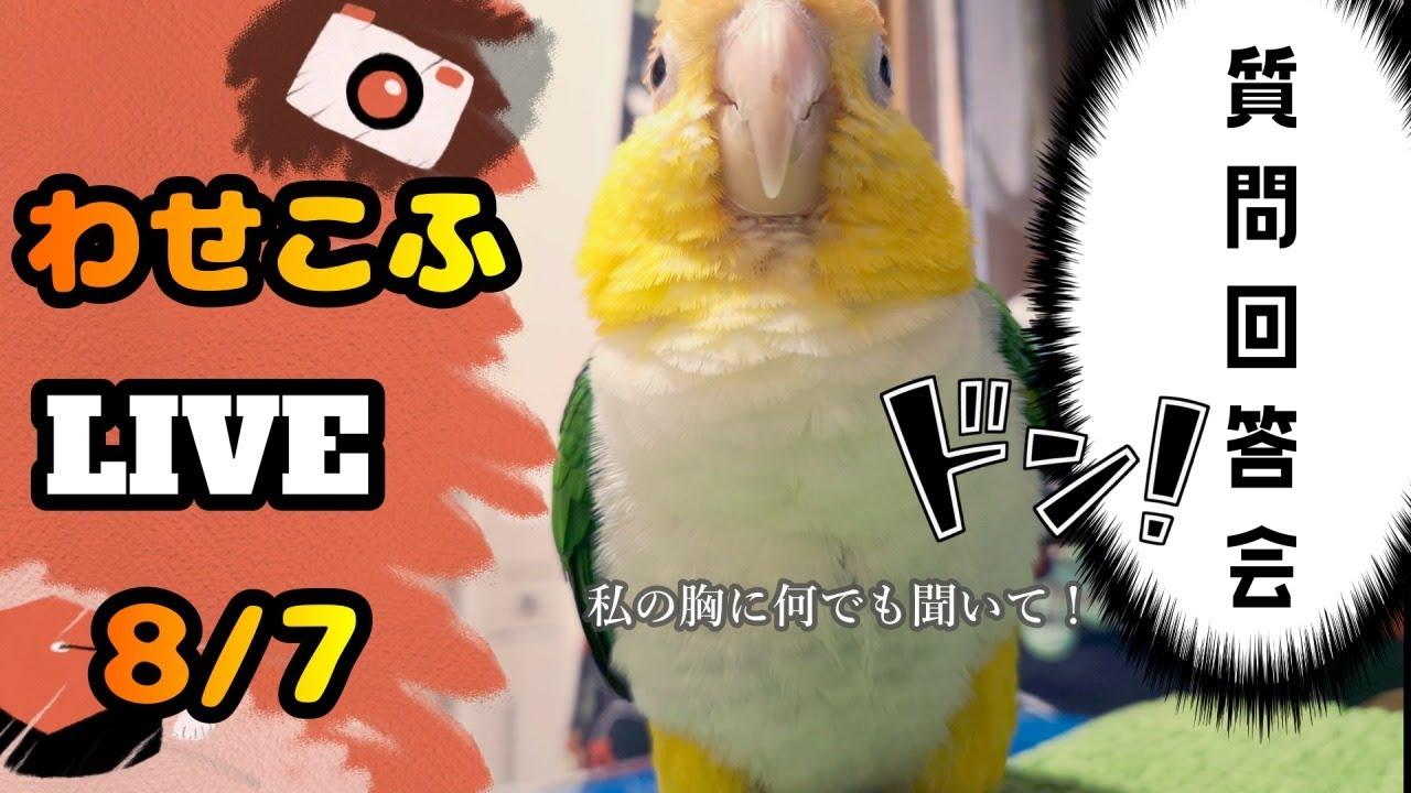 わせこふLIVE#24