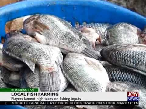 Local Fish Farming