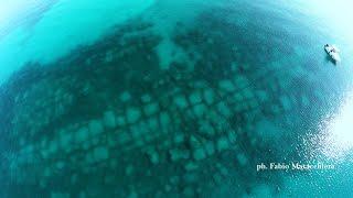 UNA SCOPERTA INCREDIBILE AL LARGO S.PIETRO IN BEVAGNA (riprese con il drone)