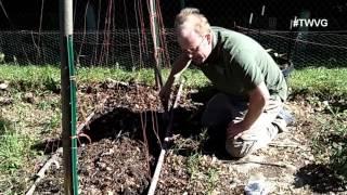 Planting Beans, Straw Bale Gardening & More The Wisconsin Vegetable Gardener