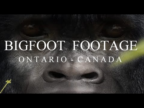 IMPRESSIVE BIGFOOT FOOTAGE!! - Man Chases 'Real Bigfoot' Gets Very Close To 'Real Sasquatch'