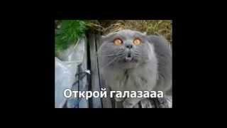 Говорящие коты, лучшая подборка