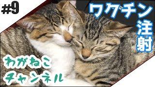 吾輩も嫌である。 ブログでも猫と暮らしてます。 吾輩と、猫である⑥:ht...