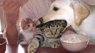 🤣 Funniest 🐶 Dogs and 😻 Cats - Awesome Funny Pet Animals' Life Videos 😇