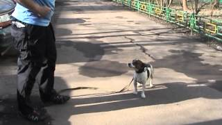 видео Как Почистить Собаке Уши и Глаза ЛЕГКО и ПРОСТО