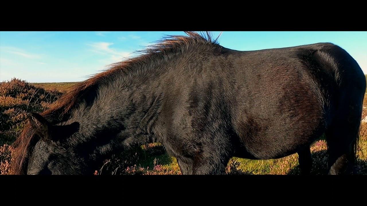 Devon (Travel film) 2