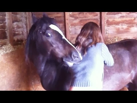 'You Scratch My Back and I'll Scratch Yours - Funny Horses Compilation' || CFS