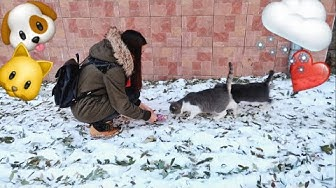 Хранихме бездомни животни ❤️