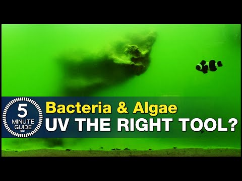 Have we all been using UV Sterilizers wrong? Using UV as a tool for bacteria and algae problems.