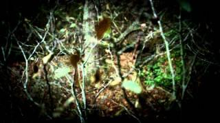 sykesville monster lechuza the rake