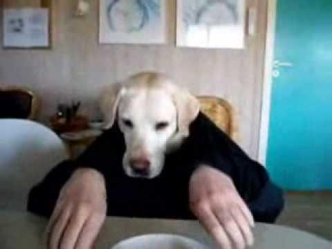 A Man with Dog head