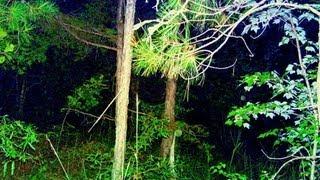 SLENDER MAN Sighting - Caught on Night Vision Camera