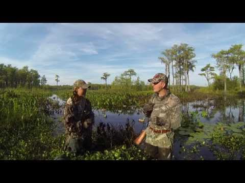 Early Duck Season Tips On Hunting And Identifying Teal And Wood Ducks