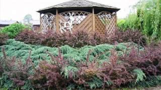 видео Обрезка живой изгороди: как правильно ухаживать за зеленым забором