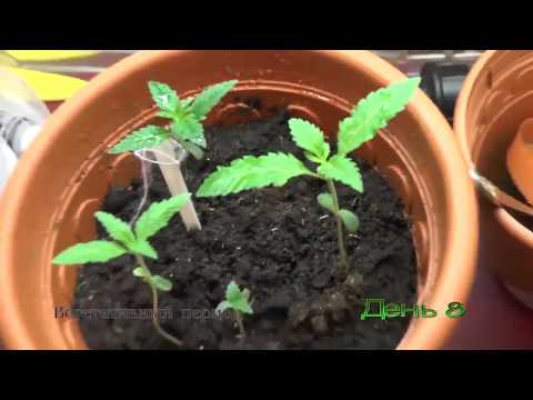 Выращивание дома от А до Я 720
