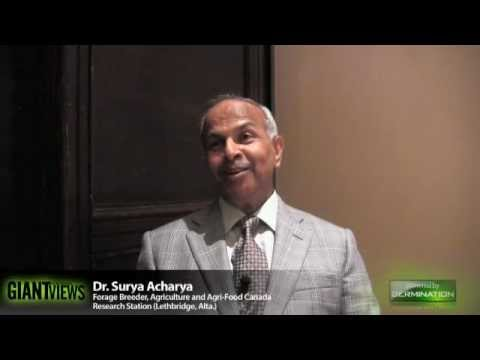 Surya Acharya, Forage Breeder, Agriculture and Agri-Food Canada Research Station (Lethbridge, Alta.)
