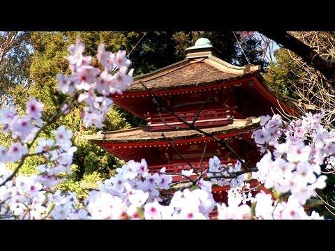 Zen Garden - Cherry Blossoms, Relaxation & Meditation - 50 minutes