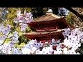 Zen Garden Cherry Blossoms Relaxation Meditation 50 Minutes mp3