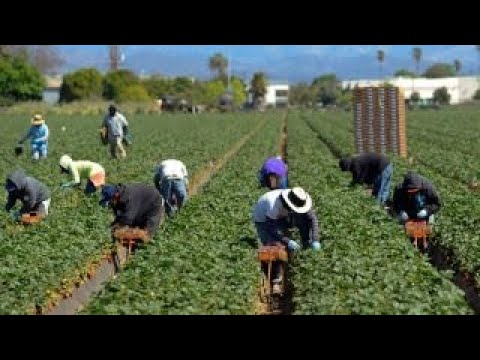 Tax reform's impact on America's farmers