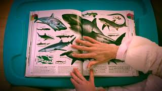 DK Smithsonian - The Animal Book - Review