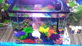 How to set up a Digital Molded aquarium - try it yourself