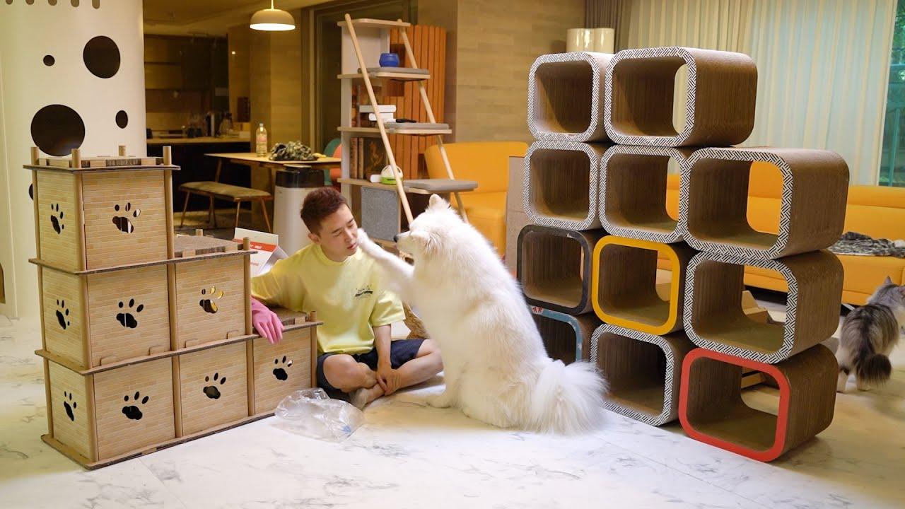 강아지와 고양이를 키우려면 청소를 얼마나 해야 될까요?