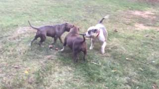 Play Date with Lucy teacup and the rest of the crew at CBF