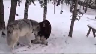 Canavar və Qız