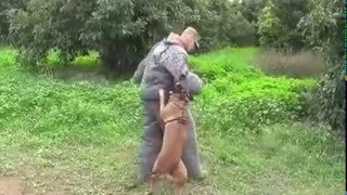 Security and Bodyguard Dog Training (Israel) - Security and Bodyguard dog Training.